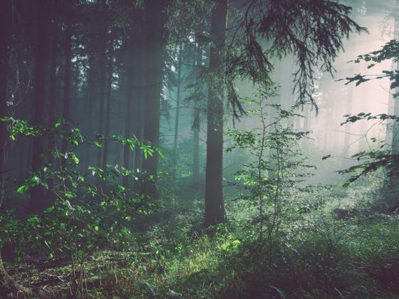 bos met schemer liberi voor blog over signalen bij een burn-out