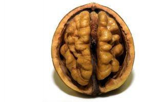 brainfood