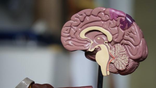 de invloed van wandelen op je hersenen