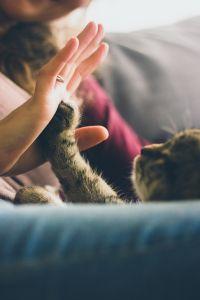 gevoel dat alles zinloos is stress huisdieren