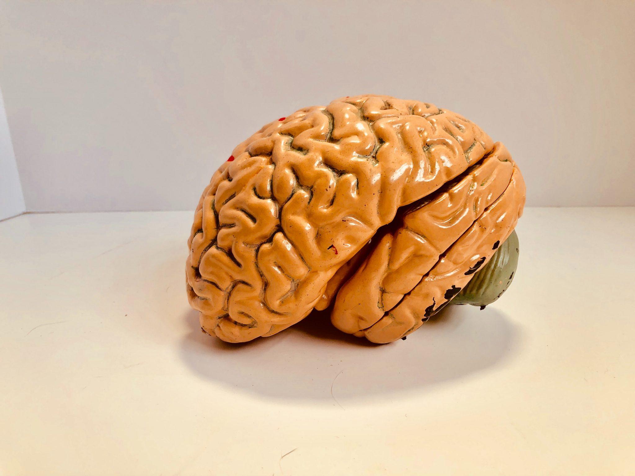 Glutamaat: belangrijke neurotransmitter voor mentale balans